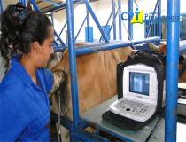59º Curso de Ultrassonografia na Reprodução Bovina - 07-12-2013