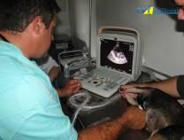 5º - Curso de Cardiologia em Pequenos Animais 12-10-2012