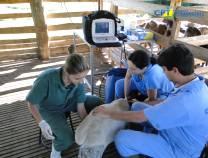 5º - Curso de Ultrassonografia em Ovinos  19-07-2012