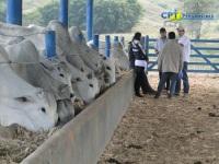6º Curso de Manejo Nutricional de Gado de Corte (Alimentos e Alimentação) 07-07-2011