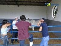 6º Curso de Manejo Reprodutivo em Bovinos 26-12-2012