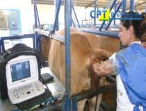 60º Curso de Ultrassonografia na Reprodução Bovina - 05/01/2014