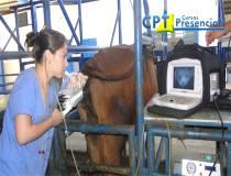 61º Curso de Aspiração Folicular (OPU) para FIV em Bovinos - 29/01/2014