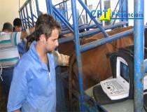 61º Curso de Ultrassonografia na Reprodução Bovina - 27/01/2014