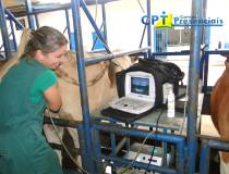 62º Curso de Ultrassonografia na Reprodução Bovina - 11/02/2014