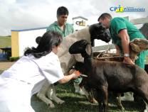 6º - Curso de Avaliação Andrológica e Congelamento de Sêmen de Ovinos 17-07-2012