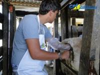 7º Curso de Palpação Retal em Bovinos 05-02-2011