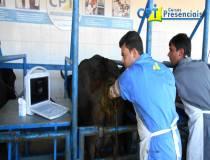 73º Cursos de Ultrassonografia e Aspiração Folicular para FIV em Bovinos 15-04-2015