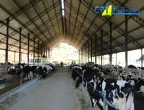7º - Curso de Manejo Reprodutivo em Bovinos - 31-07-2013