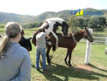7º - Curso de Manejo Reprodutivo em Equinos - 26-07-2013