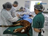8º Curso de Diagnóstico de Claudicação em Equinos 11-11-2011