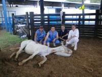 9º Curso de Anestesia em Equinos a Campo 16-10-2011