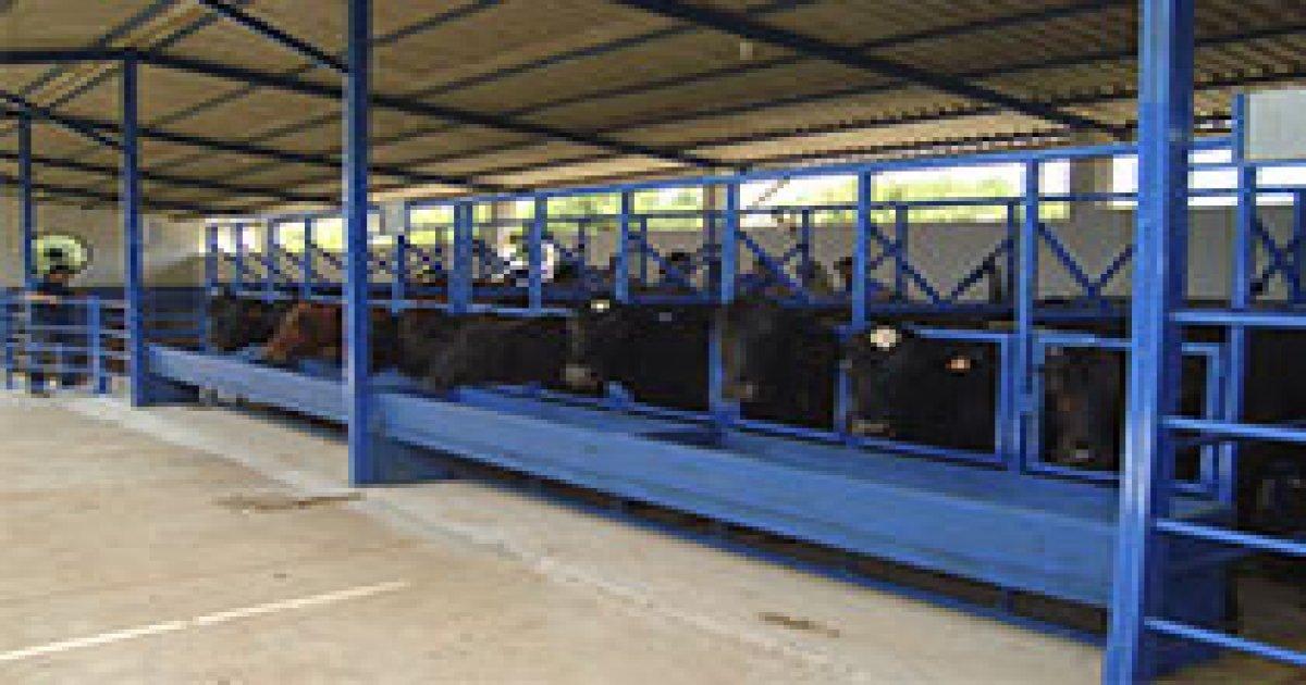 Estrutura para Produção e Reprodução Bovina