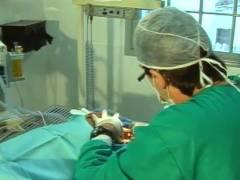Em SP empresário investe em clínica odontológica para pequenos animais