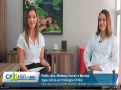 Entrevista Exclusiva sobre Principais Exames Laboratoriais na Clínica Veterinária