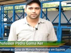 Importância das práticas de manejo para a reprodução dos equinos