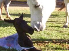 Manejo Reprodutivo em Equinos